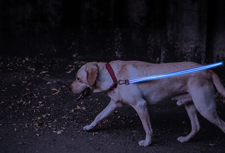 LED Rechargeable Lite Up Dog Leash