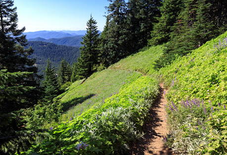 4-Day Oregon Pacific Crest Trail Backpacking